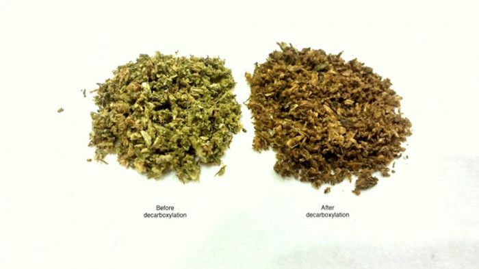 Cannabis before and after being decarboxylated