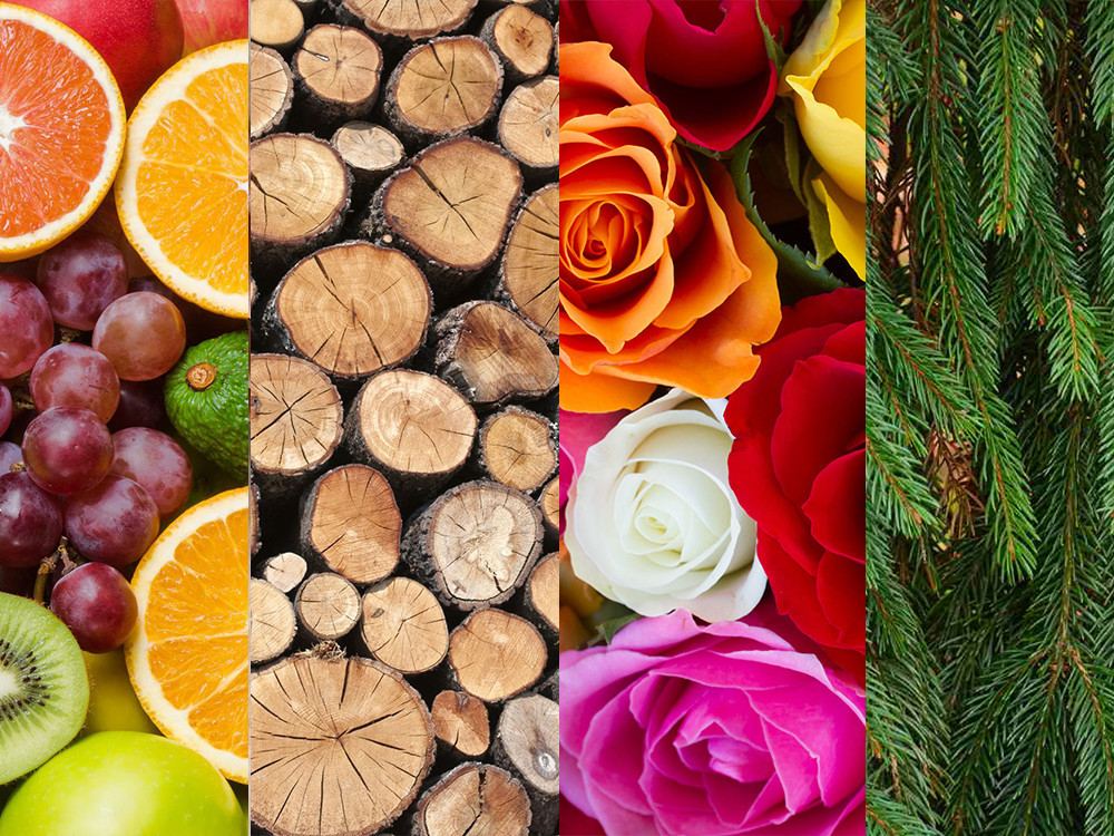 Floral, Fresh, Woody or Fruity