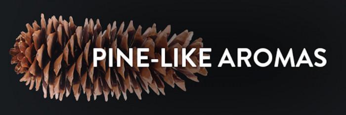 Pine-Like Aromas