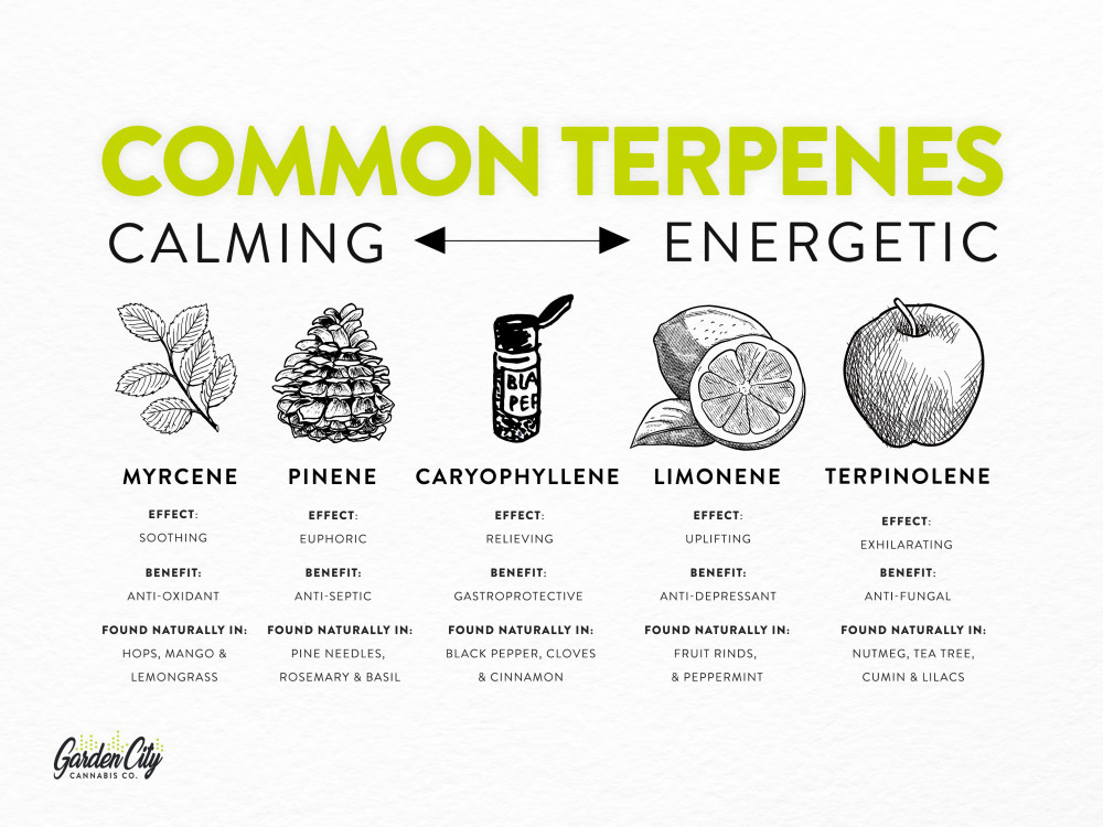 The most common terpenes